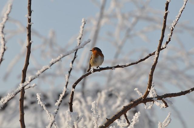 pták v zimě