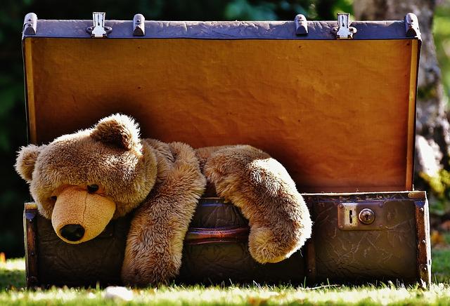 medvěd v kufru